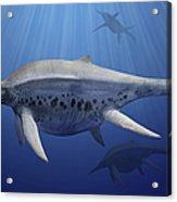 Shonisaurus Popularis Swimming Acrylic Print