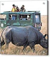 Shooting Rhinos Acrylic Print