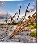 Shoreline Beach Driftwood And Grass Acrylic Print by Jenny Ellen Photography