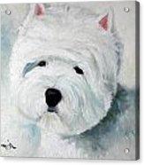 Show Dog  Acrylic Print