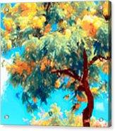 Shower Trees Acrylic Print