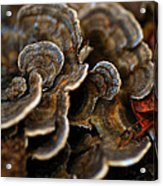 Shrooms Abstracted Acrylic Print