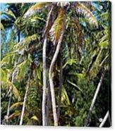 Shy Palms Acrylic Print