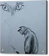 Siamese Cat Study Acrylic Print