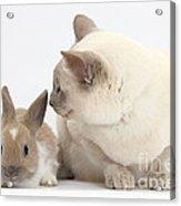 Siamese-cross Cat, Isaac, And Baby Acrylic Print