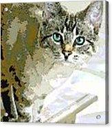Siamese Mix Kitten Acrylic Print by Dorothy Walker