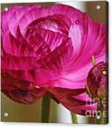 Side View Of A Blossom  Acrylic Print