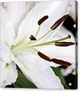 Side View Of A Lily 3 Acrylic Print