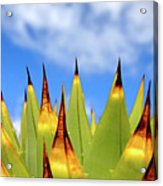 Side View Of Cactus On Blue Sky Acrylic Print by Greg Adams Photography