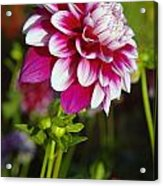 Sideview Acrylic Print