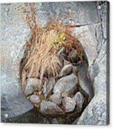 Sierra Nevada Forest 2 Acrylic Print by Naxart Studio