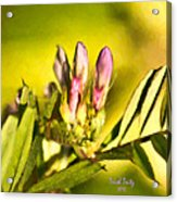 Sign Of Spring Acrylic Print