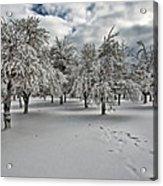 Silent Winter Acrylic Print