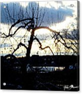Silhouette In Sunset Acrylic Print