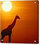 Silhouette Of A Giraffe At Sunrise Acrylic Print
