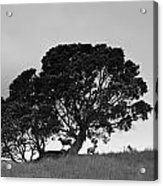 Silhouette Of A Tree With Sheep Acrylic Print