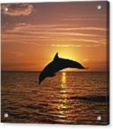 Silhouette Of Leaping Bottlenose Acrylic Print