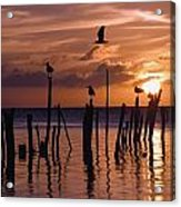 Silhouette Of Seagulls On Posts In Sea Acrylic Print
