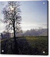 Silhouette Of Tree Acrylic Print