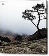 Silhouette Of Tree In Mist Acrylic Print