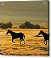 Silhouetted Horses Running Acrylic Print