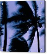Silhouetted Palm Trees Blow In The Wind Acrylic Print