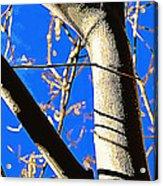 Silk Tree Acrylic Print