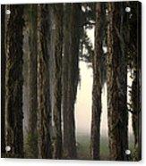 Silkwood Acrylic Print