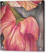 Silky Tulips Acrylic Print by Husna Rafath