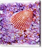 Silver Bells And Cockle Shells . . . Acrylic Print