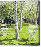 Silver Birches Acrylic Print by Lucy Willis