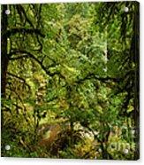 Silver Falls Rainforest Acrylic Print