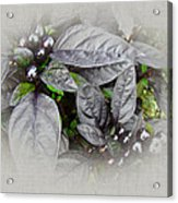 Silver Leaves And Berries Acrylic Print