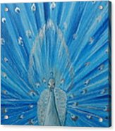 Silver Peacock Acrylic Print