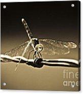 Silver Wings Acrylic Print