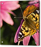 Simple Butterfly Acrylic Print