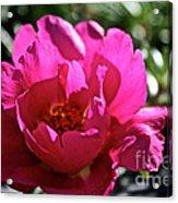 Simple Rose Acrylic Print