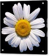 Simply A Daisy Acrylic Print