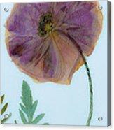 Simply Poppy  Acrylic Print