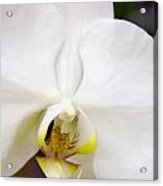 Simply Pure Orchid Acrylic Print
