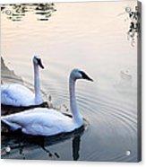 Sing Of White Swan Acrylic Print