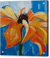 Single Cornflower Acrylic Print