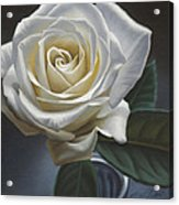 Single White Rose Acrylic Print