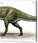 Sinraptor Dongi, A Prehistoric Era Acrylic Print