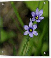 Sisters Of The Purple Plants Acrylic Print