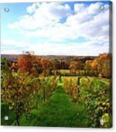 Six Miles Creek Vineyard Acrylic Print