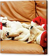 Six Puppies Sleep On Sofa, Some Wear Santa Hats Acrylic Print