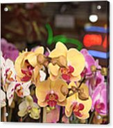 Sixth Avenue Orchids Acrylic Print by Denice Breaux