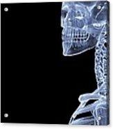 Skeleton, X-ray Artwork Acrylic Print