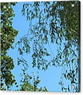 Sky And Leaves Acrylic Print